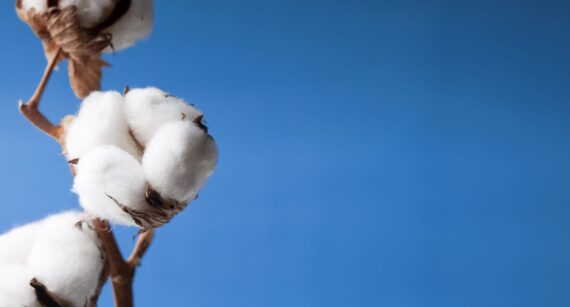 Understanding How Cotton Is Produced for the Textile Industry